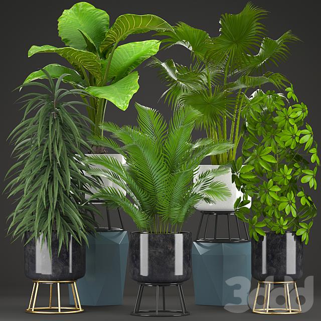Коллекция растений 215.