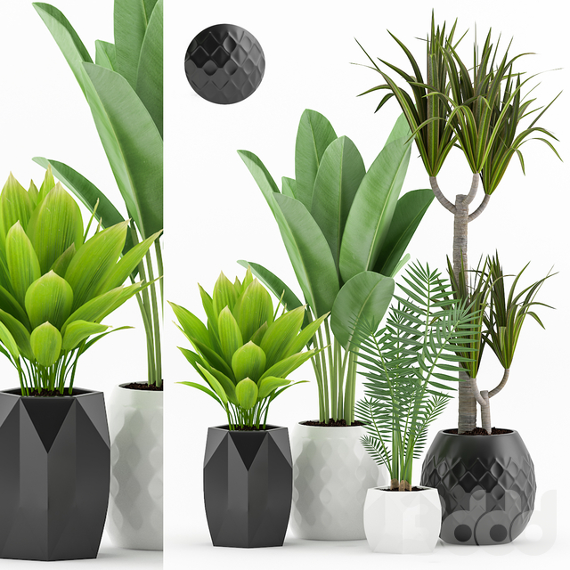 Plant 60