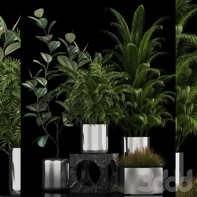Plants collection 106
