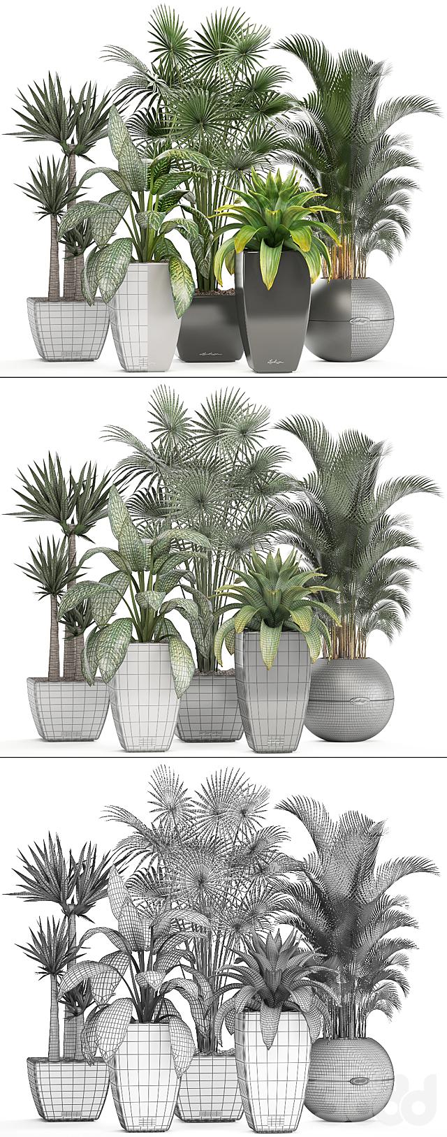 Коллекция растений 223.