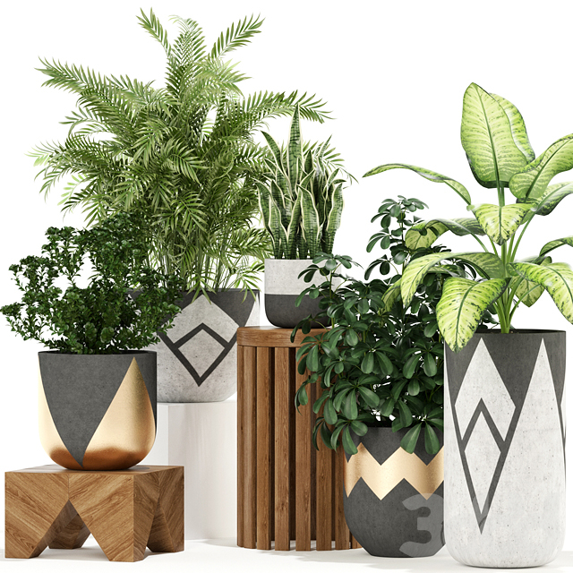 Plants collection 109