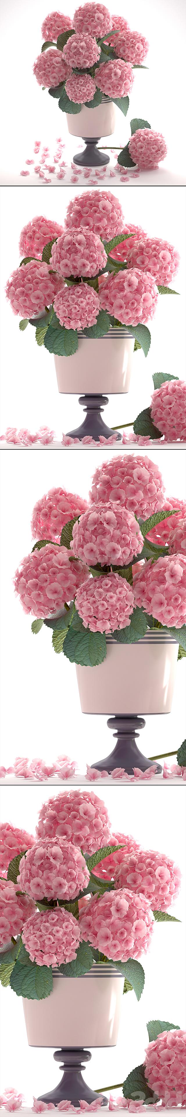 Коллекция цветов 53. Гортензия.
