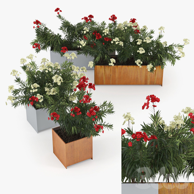 Flowerbed Nerium Planterworx - RANCH, TRUE SQUARE