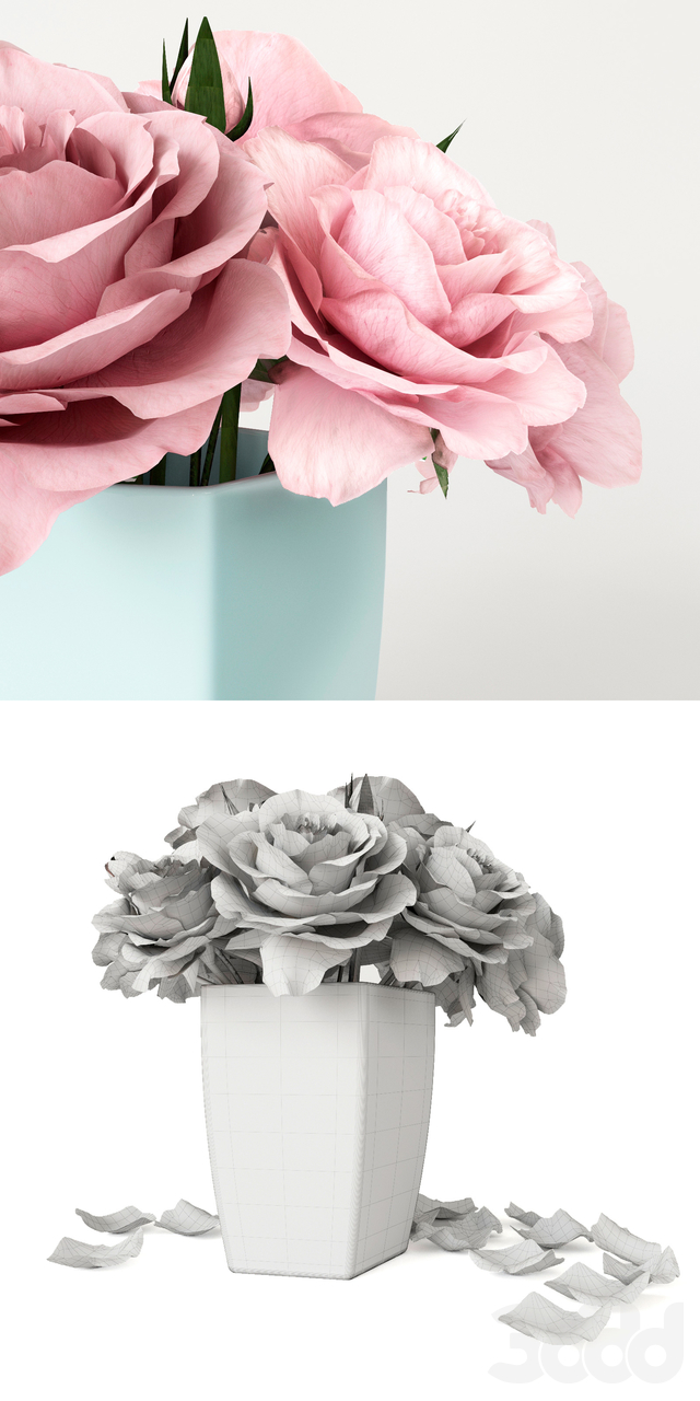 Roses of pastel color