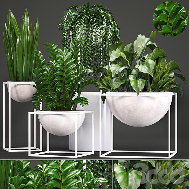 Коллекция растений 233.
