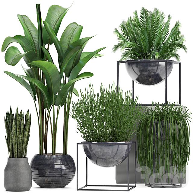 Коллекция растений 236.