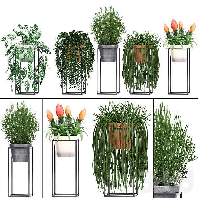 Коллекция растений 237.