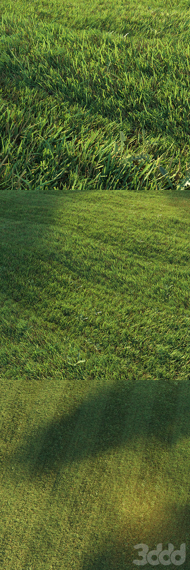 Стриженный газон