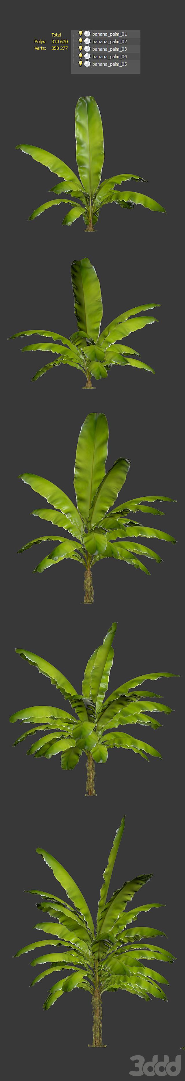 Банановая пальма. Набор из 5 моделей