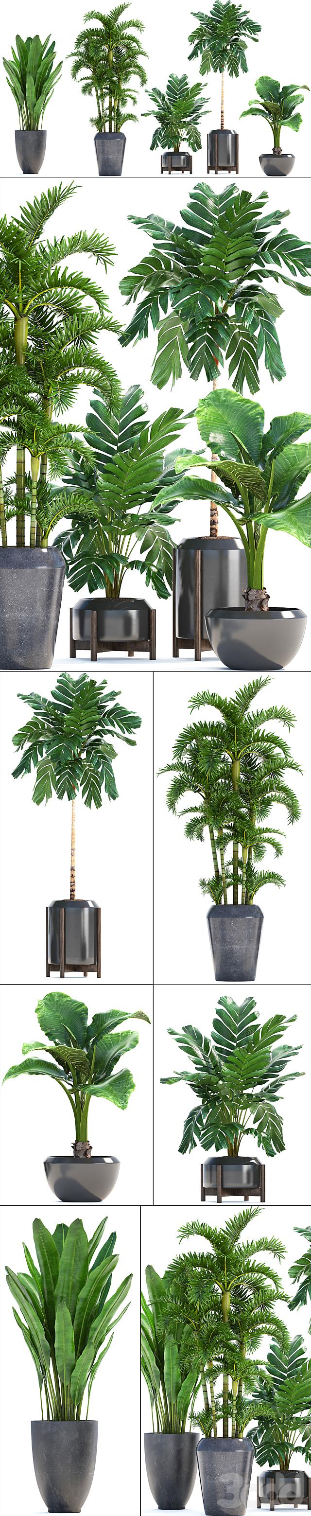 Коллекция растений 250.