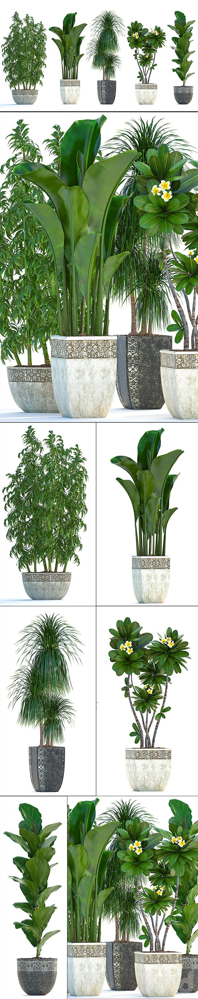 Коллекция растений 251.
