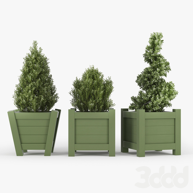 Buxus green pot