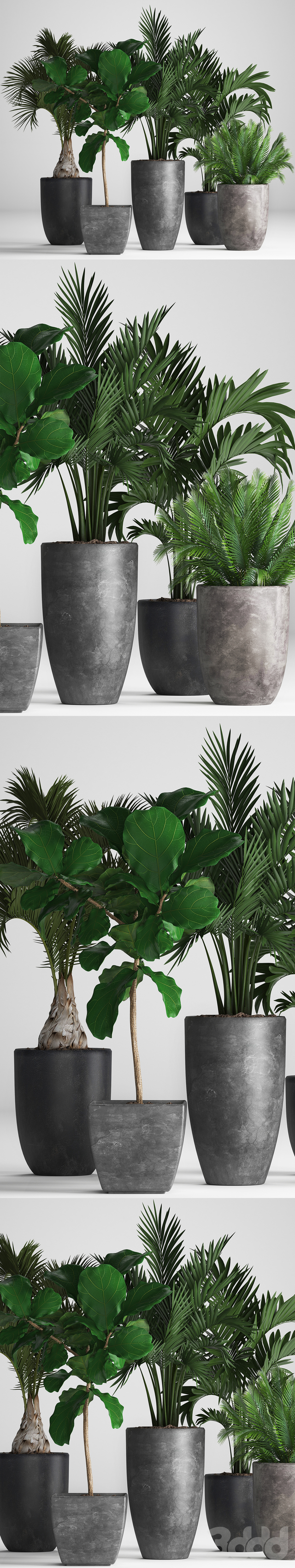Коллекция растений 257.