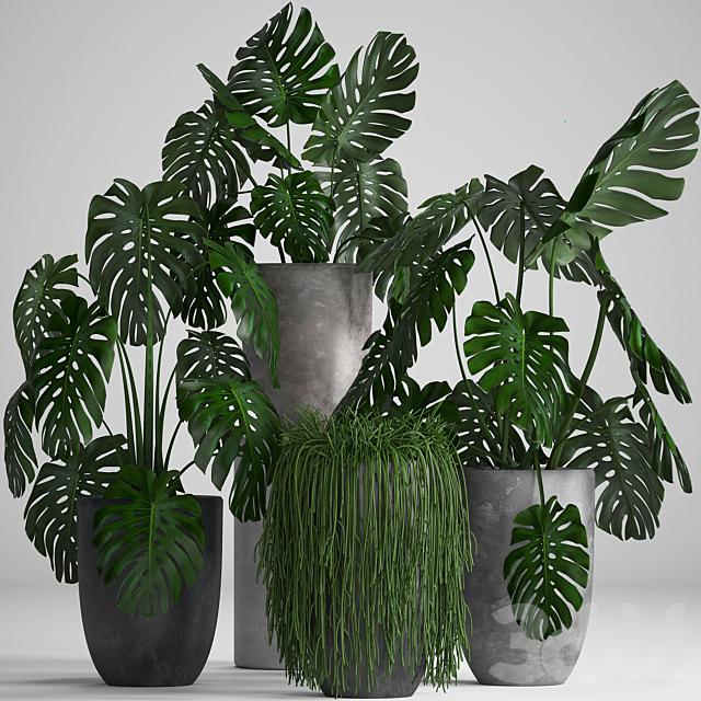 Коллекция растений 260.