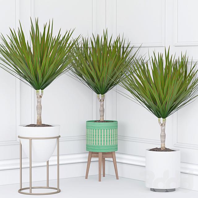 Комнатное растение 33
