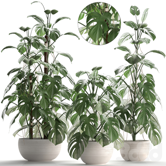 Коллекция растений 262.