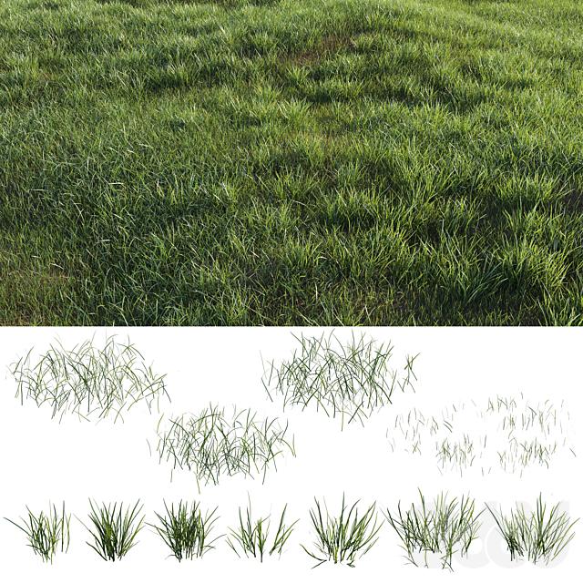 Grass-plot