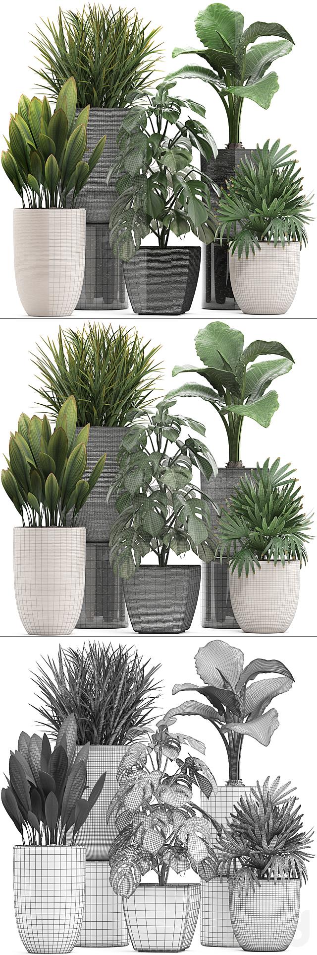 Коллекция растений 277.