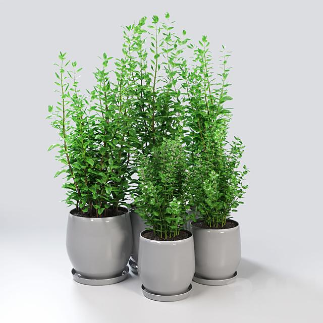 Kitchen Plant - Campana Grey Planters