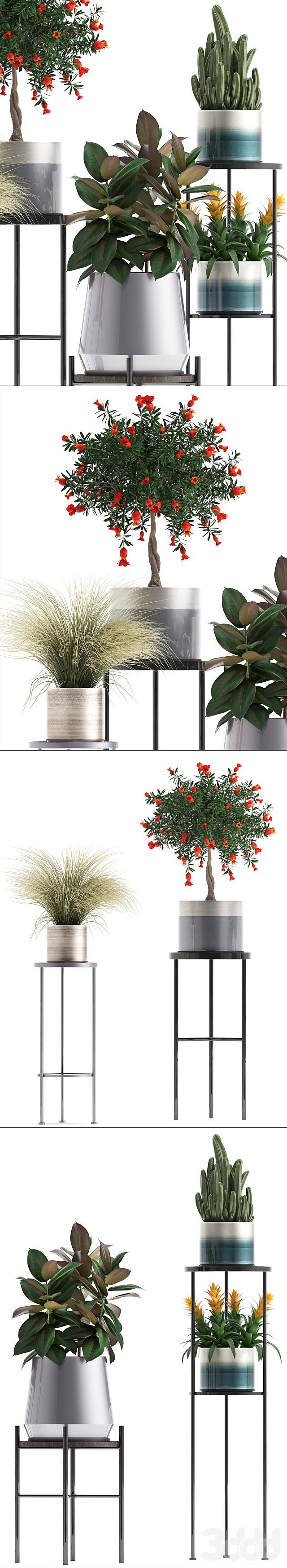 Коллекция растений 287.