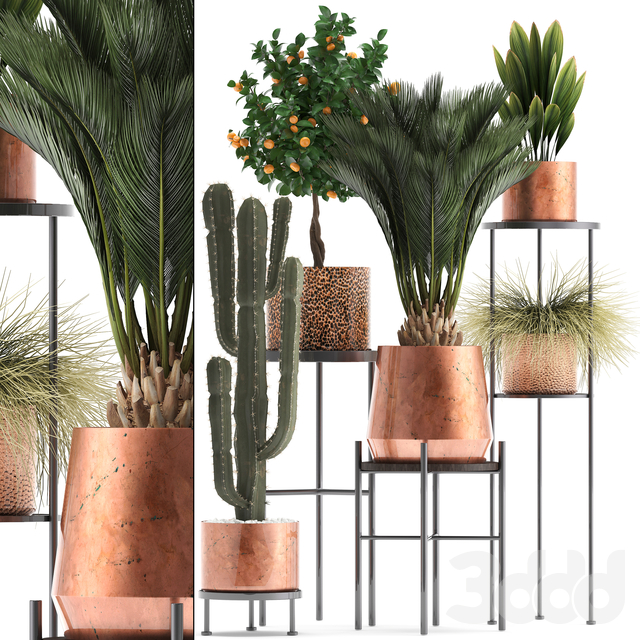 Коллекция растений 288. copper pot