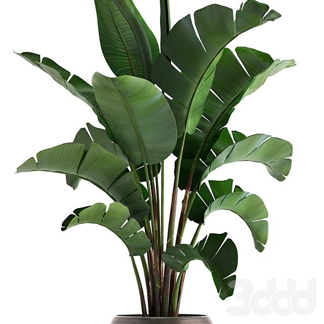 Коллекция растений 294.