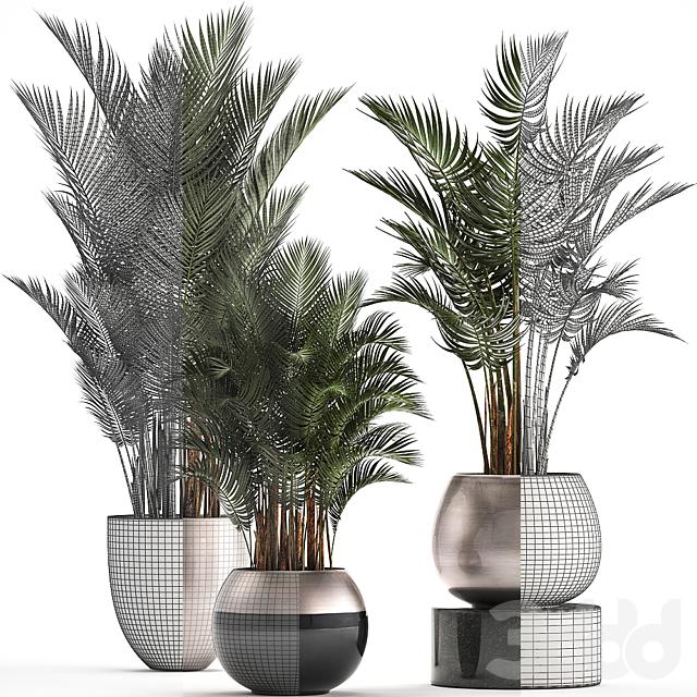 Коллекция растений 296.