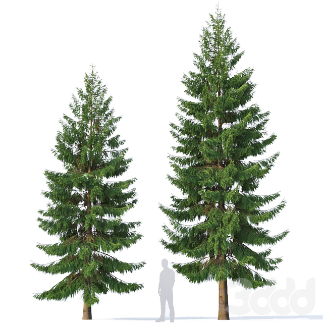 Spruce # 5 Two sizes H8,10m. Modular branches