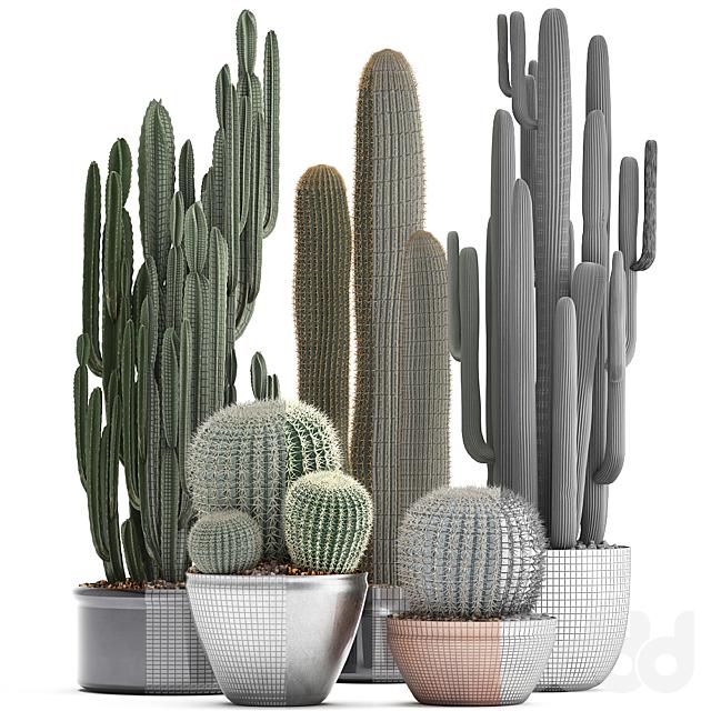 Коллекция растений 300. Cactus set.