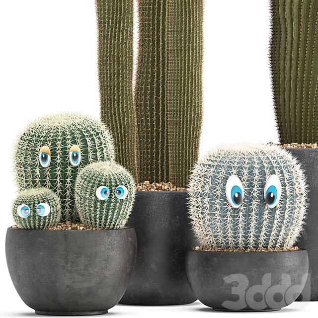 Коллекция растений 301. Cactus set.