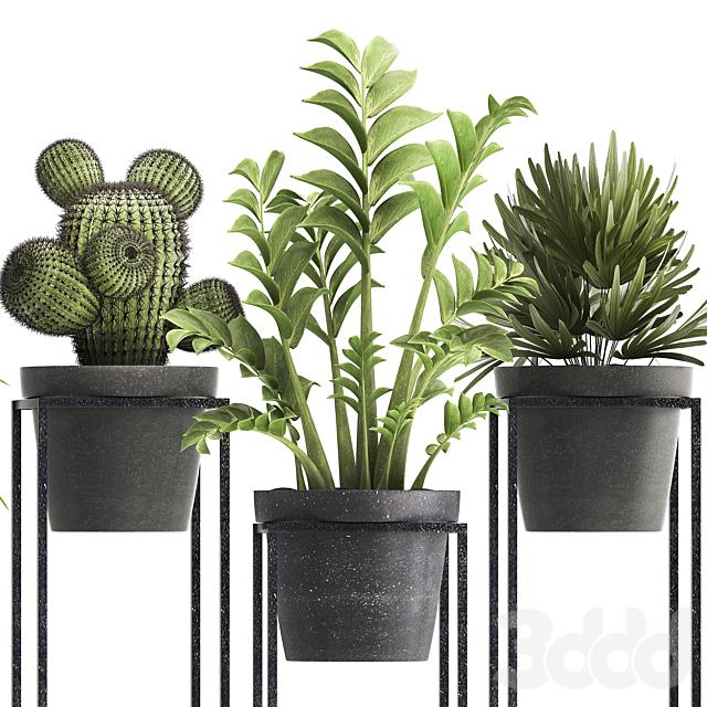 Коллекция растений 314.