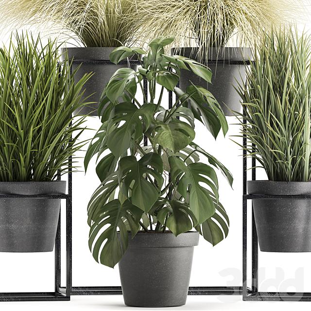 Коллекция растений 316.