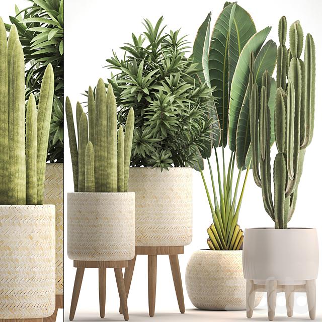 Коллекция растений 320.