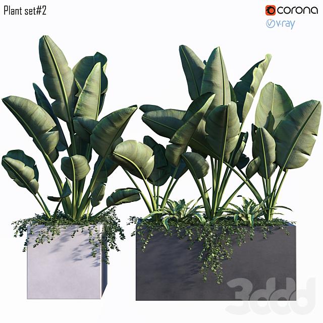Plant set #2
