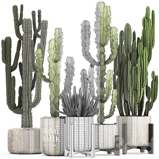 Коллекция растений 324.