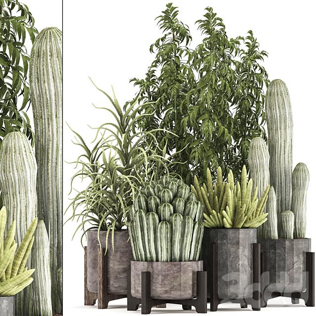 Коллекция растений 325.