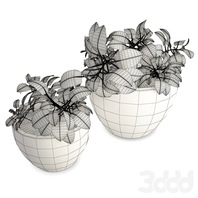 Interior Flower pot