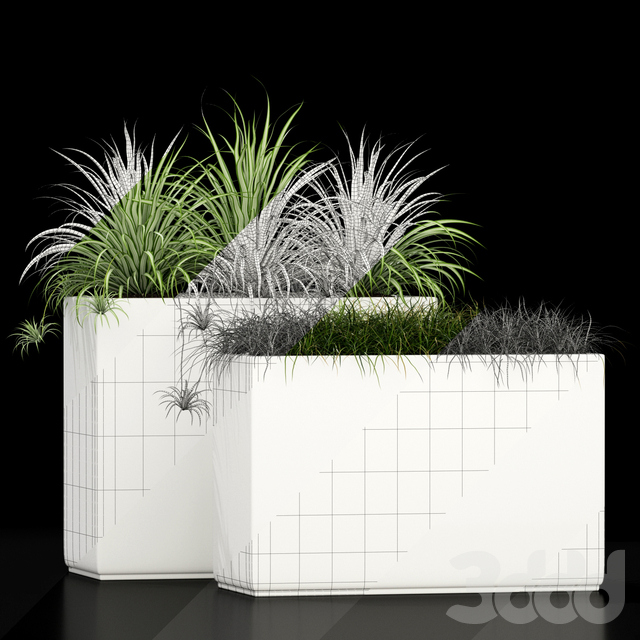 Plants collection 186
