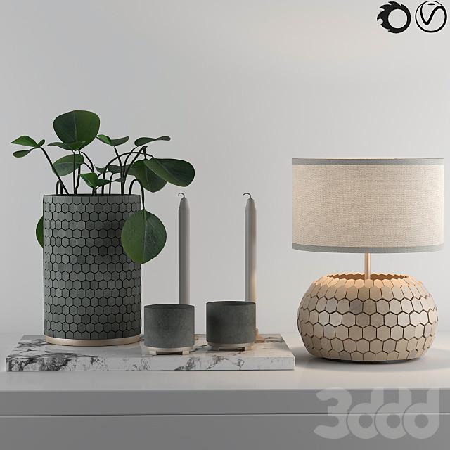 Decorative Set with Desert Privet Plant