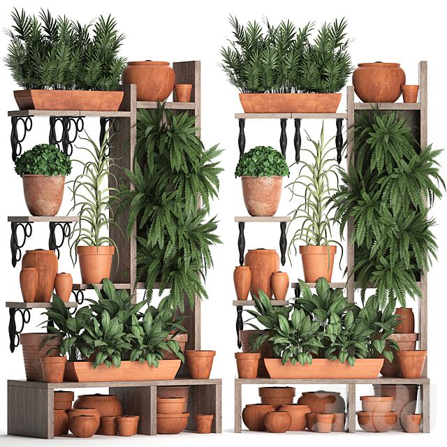 Коллекция растений 366