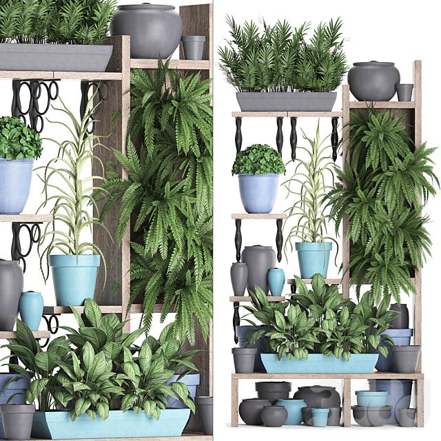Коллекция растений 367
