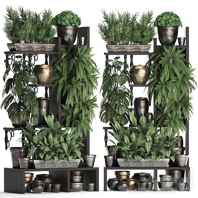 Коллекция растений 368