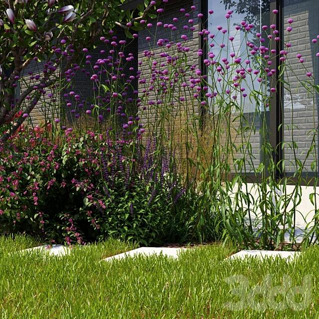 Вербена бонарская цветы | Verbena bonariensis