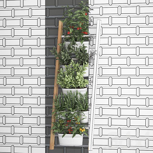 Вертикальное озеленение. 35