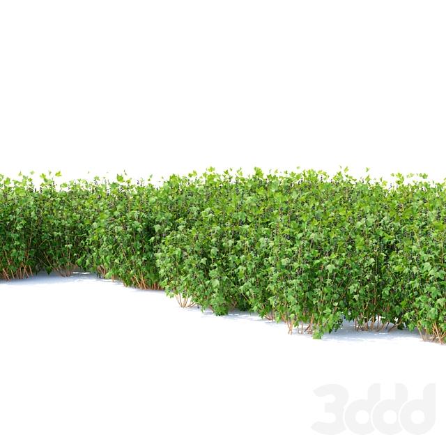Смородина кусты | Currant