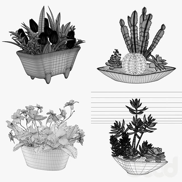 Комнатные растения в горшке - набор 4