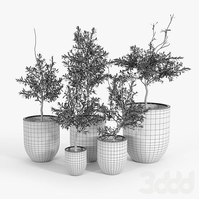 Neo Planter Rust