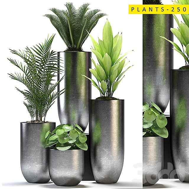 plants 250