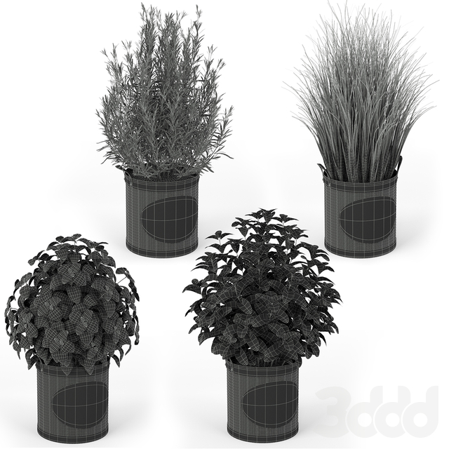 Plants collection 202
