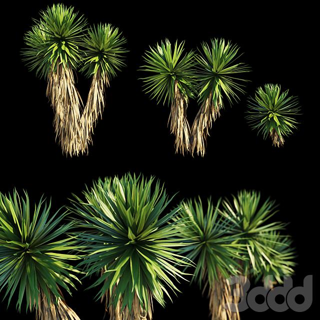 Yucca Plants (3 MODEL)